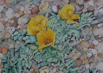 Yellow Horned-poppy, acrylic ink, Sarah Colgate ©