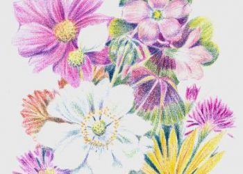 Summer Flowers, coloured pencil, Sarah Colgate ©