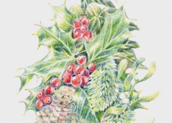 Winter Flora, coloured pencil, Sarah Colgate ©